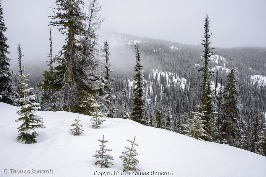 Snow storm moves through Roaring Creek valley in Alpine Lakes Wilderness
