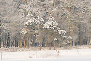 Nederland, Boxtel, 20100104.<br /> Met sneeuw bedekt akkerland aan een bosrand in de omgeving van Boxtel.<br /> Lennisheuvel. Maakt onderdeel uit van het Nationaal Landschap Het Groene Woud.<br /> <br /> Netherlands, Boxtel, 20,100,104.  With snow covered farmland next to a forest near Boxtel.  Lennisheuvel. Is part of the National Park 'Het Groene Woud'