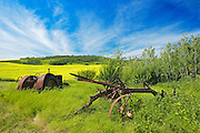 Old farm equipment (tractor and cultivator) and canola crop on farmland<br /> Baljennie<br /> Saskatchewan<br /> Canada
