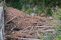 Snow Avalanche Damage piled against the highway bridge abutment on Stevens Creek, Mount Rainier National Park, Washington, USA