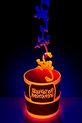 A glowing monkey hangs at the end of a chain of a barrel of monkeys.  Blacklight photography.