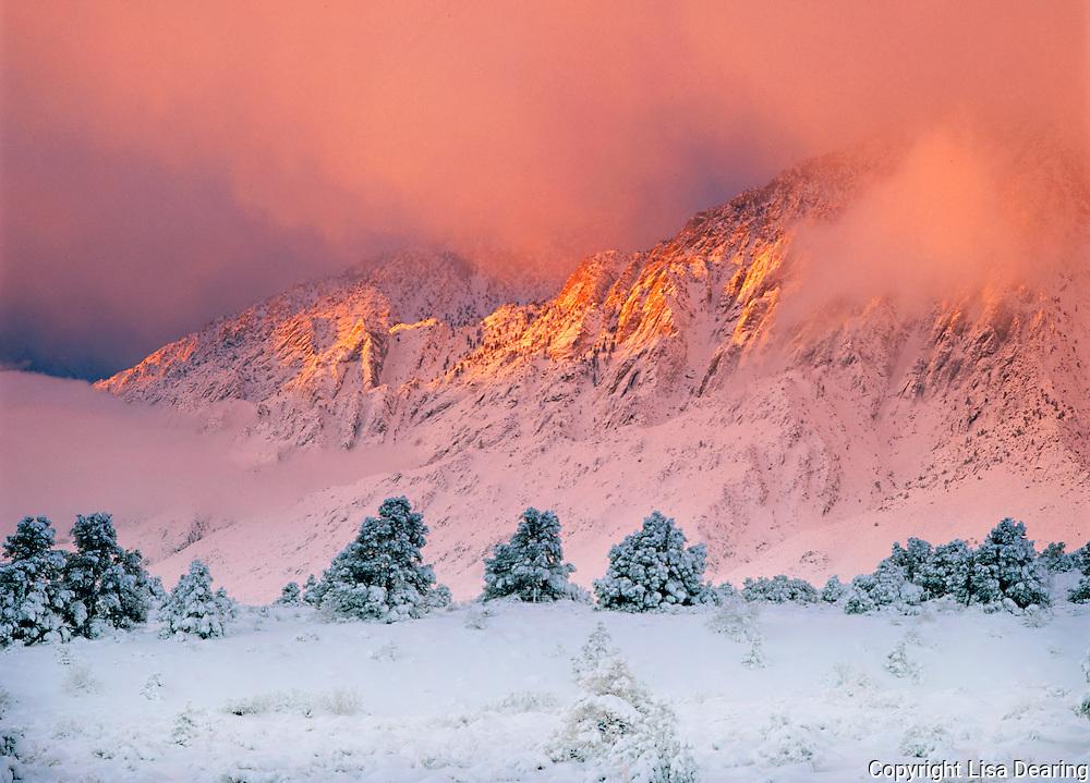 Snow Storm Blankets the Eastern Sierra Mountaians near Lee Vining, California