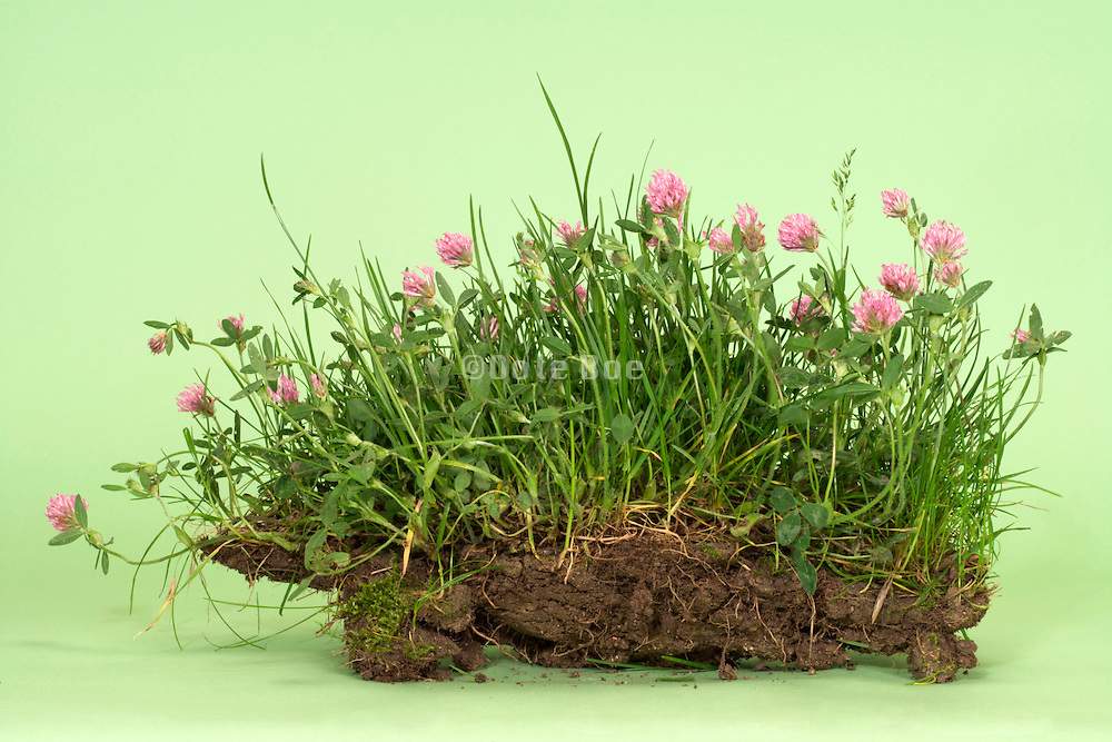 wild grasses and flower on a clump of earth