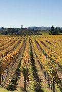 Fall colors of a Sonoma County Vineyard, California