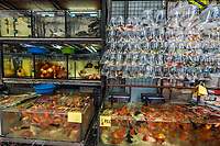 goldfish market mong kok kowloon in hong kong