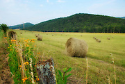 Hay Bales in field against green mountain