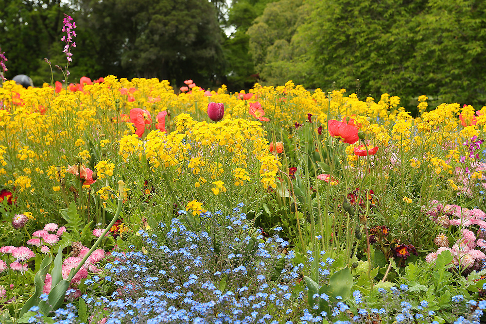 Spring flowers,  Botanic Gardens,   Christchurch, New Zealand, Tuesday, 03 November, 2015.    Credit: SNPA / Pam Carmichael