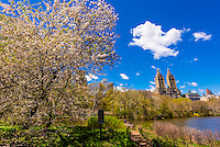 View of buildings along Central Park West seen from Central Park, New York, New York USA.