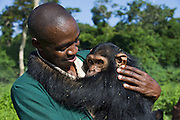 Chimpanzee<br /> Pan troglodytes<br /> Fred Nizeyimana (Veterinarian) holding rescued infant chimpanzee<br /> Ngamba Island Chimpanzee Sanctuary<br /> *Model release available - release # MR_006<br /> *Captive