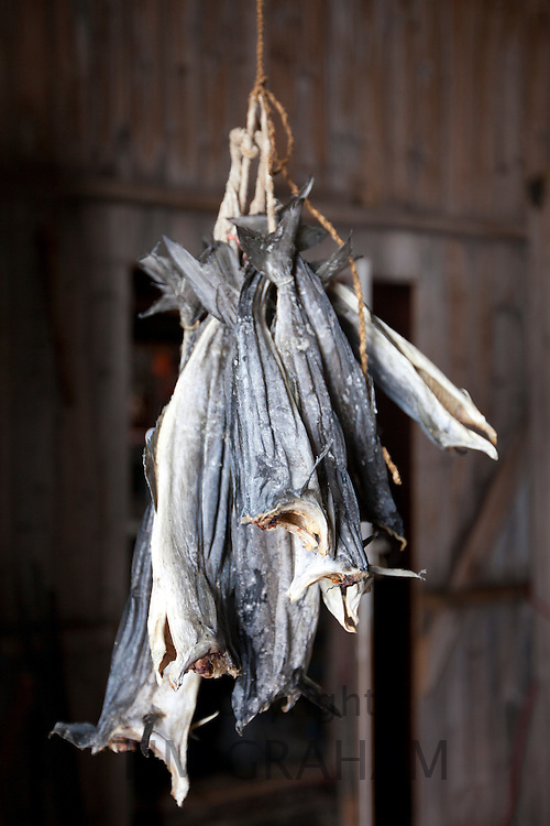 Stockfish, cod, drying in fisherman's hut in the Arctic Circle on the island of Ringvassoya in the region of Tromso, Northern Norway