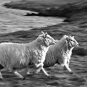 Nordic Vision Shetland 800