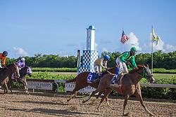 Unguided MIssile wins Race 4.  Horse Racing at Clinton Phipps Race Track.  St. Thomas, USVI.  18 October 2015.  © Aisha-Zakiya Boyd