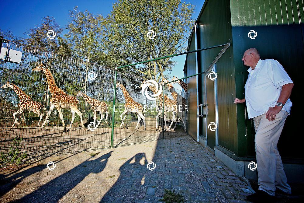 HILVARENBEEK - Op zaterdag 15 oktober opent Safaripark Beekse Bergen een nieuw giraffenverblijf voor haar veertien giraffen waaronder een veulen.  Met op de foto de langste man van Nederland Rob Bruintjes. FOTO LEVIN DEN BOER - PERSFOTO.NU