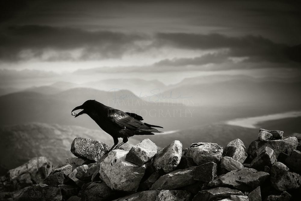Buachaille Etive Mor Raven,