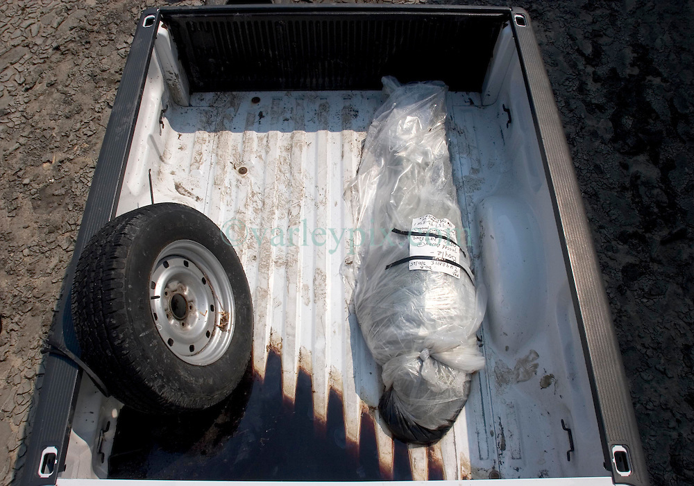 05 Sept  2005. New Orleans, Louisiana. Post hurricane Katrina.<br /> The body of 40 year old Eugenie Boyle lies in the back of a pick up truck, discarded off the Chef Menteur Highway in East New Orleans.<br /> Photo; ©Charlie Varley/varleypix.com
