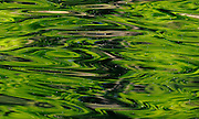 Water reflects green forest, Norfork Lake, Arkansas.