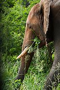 SA Animal Life