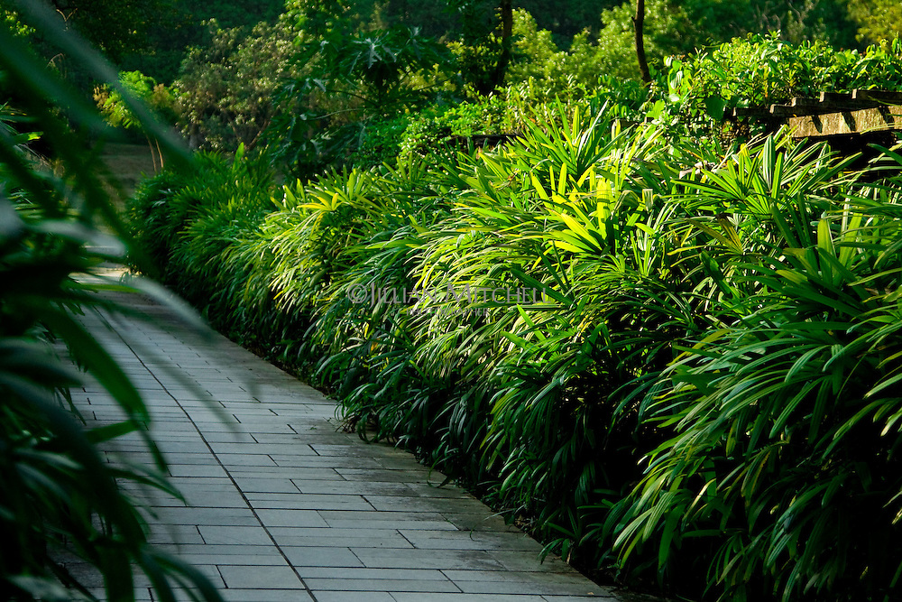 Hundreds of thousands of plants are to be found at the Guangxi Medicinal Herb Botanical Garden in Nanning.