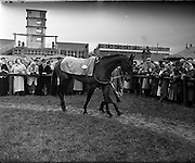 08/03/1958<br /> 03/08/1958<br /> 08 March 1958<br /> Grand National entries at the Leopardstown Races. &quot;Richardstown&quot; owned by Mr. J. Neville.