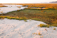 Wetlands, bay marsh, Rehobeth Bay, Delaware, USA