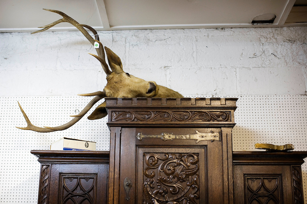 Dublin. A deer head in an antique shop.