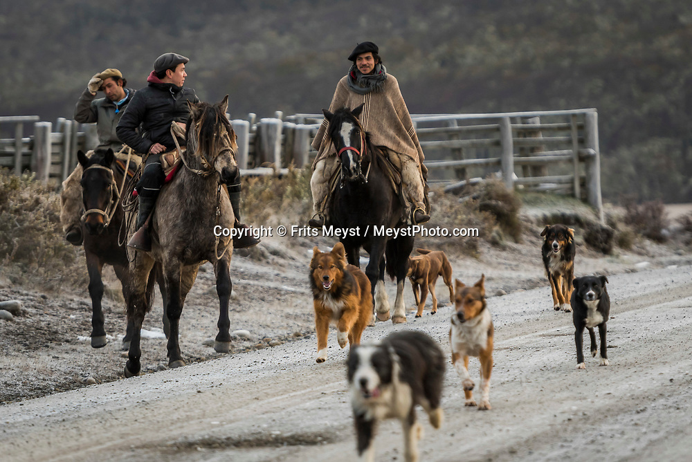 Porvenir, Tierra del Fuego, Chile, June 2017. Gauchos with their dogs guide their sheep over the endless pampa. The windswept pampas of Southern Patagonia and Tierra del Fuego are truly among the one of the world's last frontiers. It was settled by European sheep farmers who have been carving out an existence in this barren land since the 19th century. In a race to control access to 'the end of the world' the Chilean government built a spectacular road, which now functions as the access to some of the last unexplored wildernesses on earth. Welcome to the Darwin Range, Karukinka National Park. Hiking, horseback riding and fly fishing awaits those who are ready for Adventure. Photo by Frits Meyst / MeystPhoto.com