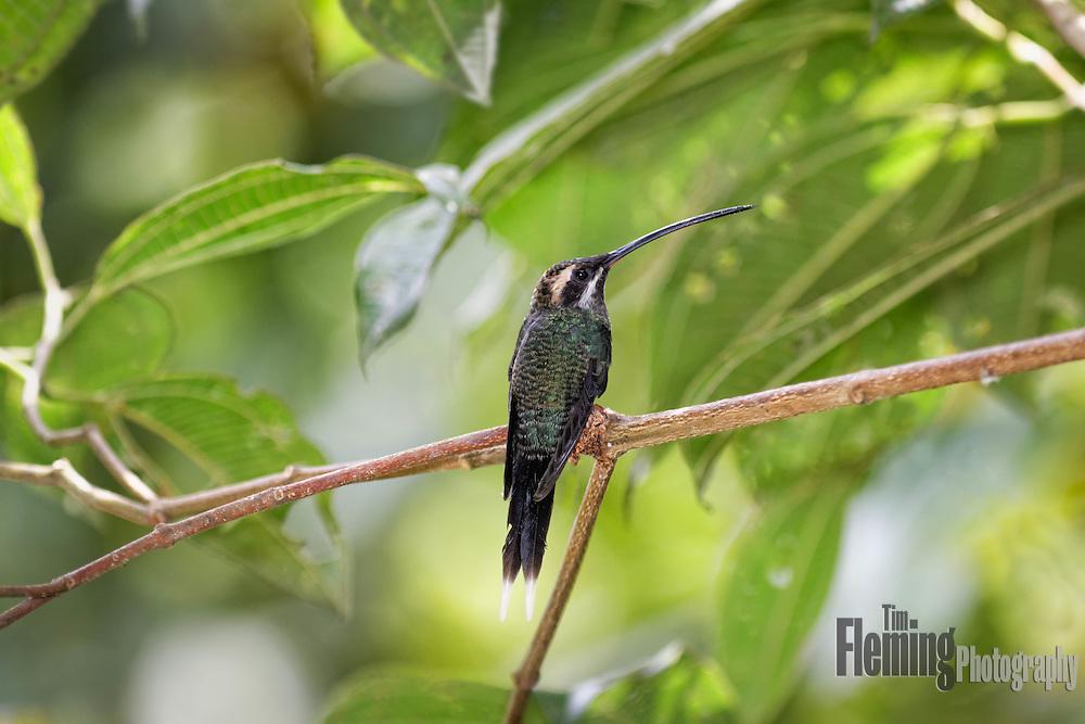 Near Milpe, Ecuador