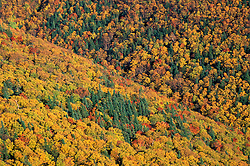 Fall foliage on the slopes of New Hampshire's Mt. Lafayette. Franconia Ridge.  White Mountains.  Old Bridle Path, Mt. Lafayette, NH