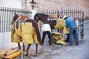 Mexican workers layer pads called petos on horses for the Picadors at the Plaza de Toros in San Miguel de Allende, Mexico. Picadors ride horses surrounded by a peto, a mattress-like protection that greatly minimizes damage to the animal during the bullfight.