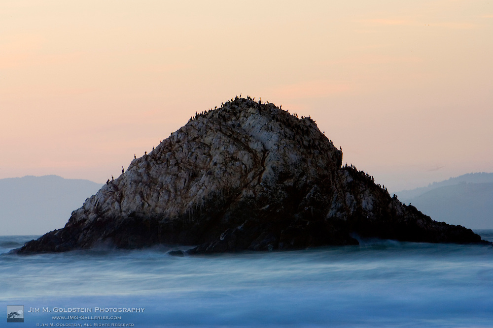Seabirds resting on Seal Rock at sunset - San Francisco, California