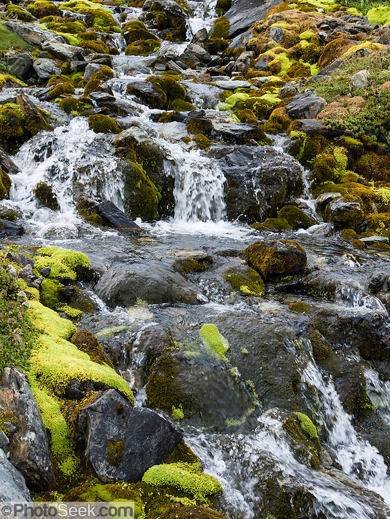 A stream tumbles through moss in the Martial Mountains in the southern Andes, on the Canadon Negro trail, in Tierra del Fuego National Park, a day hike by ski lift above Ushuaia, Argentina, South America. The foot of South America is known as Patagonia, a name derived from coastal giants, Patagão or Patagoni, who were reported by Magellan's 1520s voyage circumnavigating the world and were actually Tehuelche native people who averaged 25 cm (or 10 inches) taller than the Spaniards.