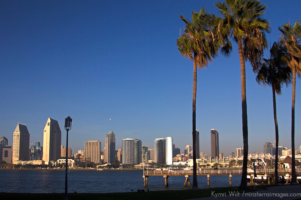 USA, California, San Diego. San Diego Skyline and Palm Trees.