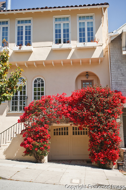Houses with Bougainvillia In San Francisco's Cow Hollow Neighborhood