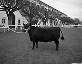 1954 04/05 RDS Spring Show, Ballsbridge