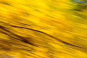 In the mid afternoon sun the yellow leaves on the ash stood out briiliantly.  I was facinated by design formed by the dark branches and yellow leaves.