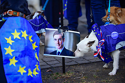 "© Licensed to London News Pictures. 10/03/2019. LONDON, UK. A dog at a Jacob Rees-Mogg pee station in Victoria Park Gardens, next to the Houses of Parliament, for ""Brexit is a Dog's Dinner"", a protest to urge MPs to vote to ensure that a no-deal Brexit is avoided and to give the people of the UK a final say.  Next week, there will be a series of up to three votes in the House of Commons where MPs will vote on whether to accept Theresa May's Brexit deal.  Photo credit: Stephen Chung/LNP"
