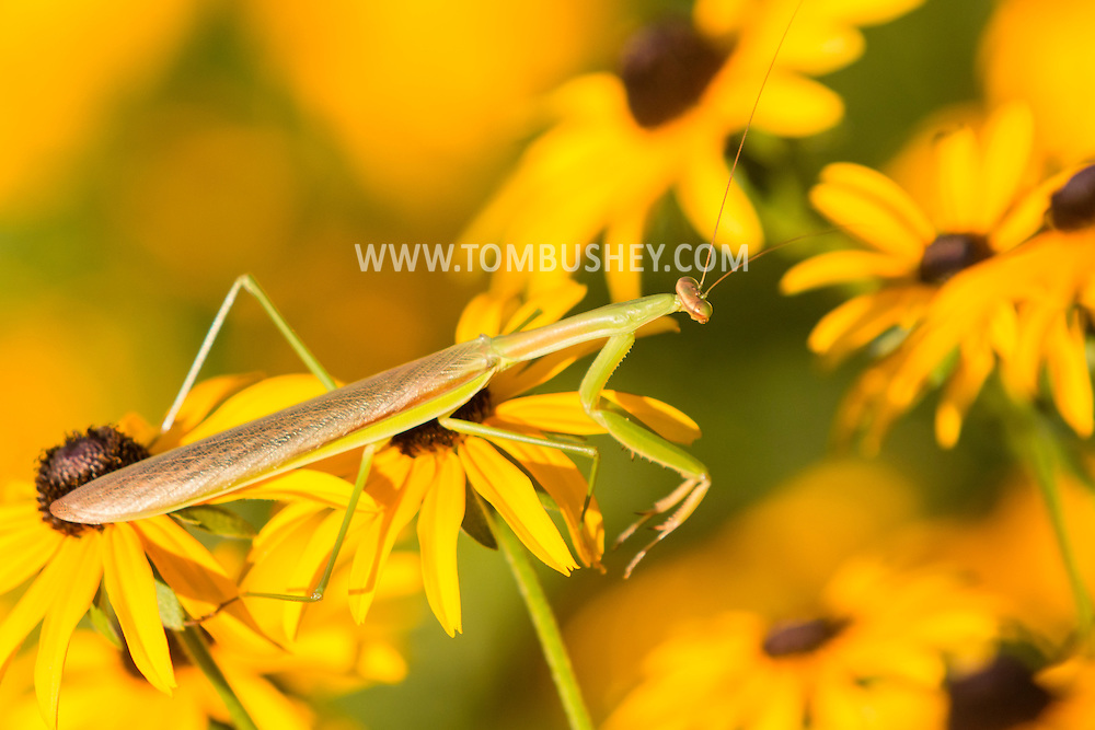 Pine Bush, New York - Flowers and insects on Aug.19, 2016.
