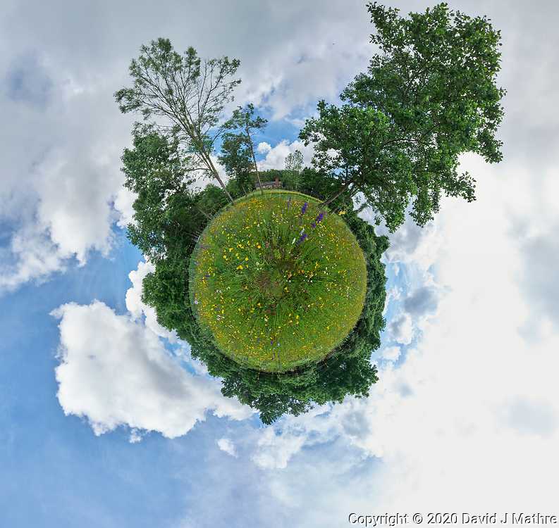 Summertime Dreams -- Backyard Wildflower Meadow. Composite of 27 images taken with a Leica SL2 camera and 16-35 mm lens (ISO 400, 16 mm, f/16, 1/125 sec). Raw images processed with Capture One Pro and AutoPano Giga Pro.