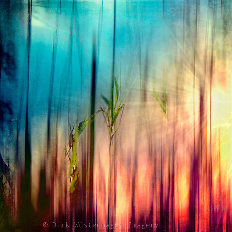 Sunset through trees abstraction<br />