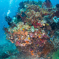 Healthy reef scene, Komodo Island, Indonesia.