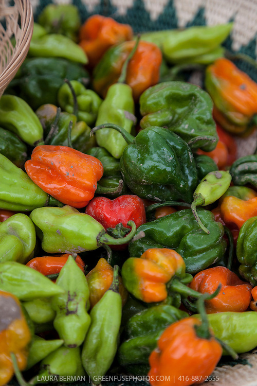 A basket of Scotch Bonnet peppers at a farmers market.