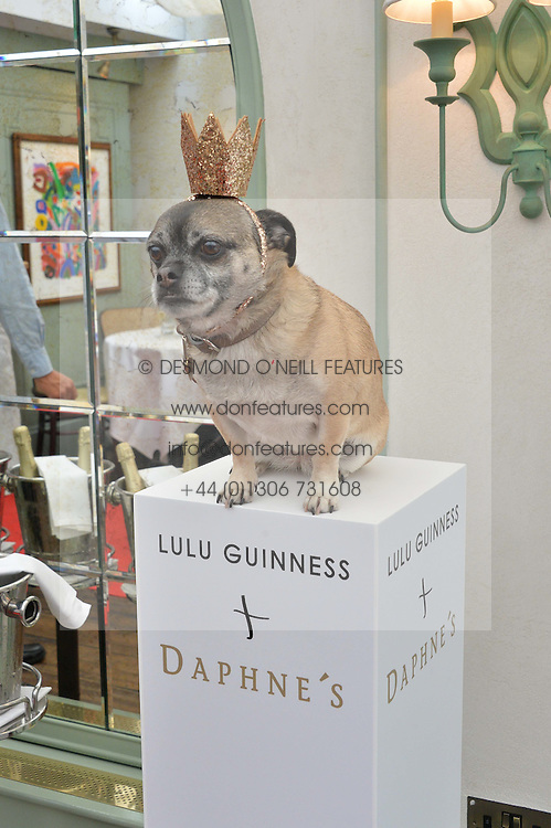 Puppy the dog at a party hosted by Lulu Guinness and Daphne's to launch Lulu's Designer Dog Bowl and to mark Daphne's allowing dogs through it's doors, held at Daphne's, Draycott Avenue, London on 28th June 2016.