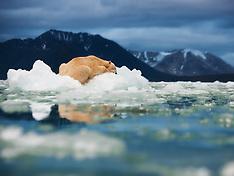 Svalbard #12 2011