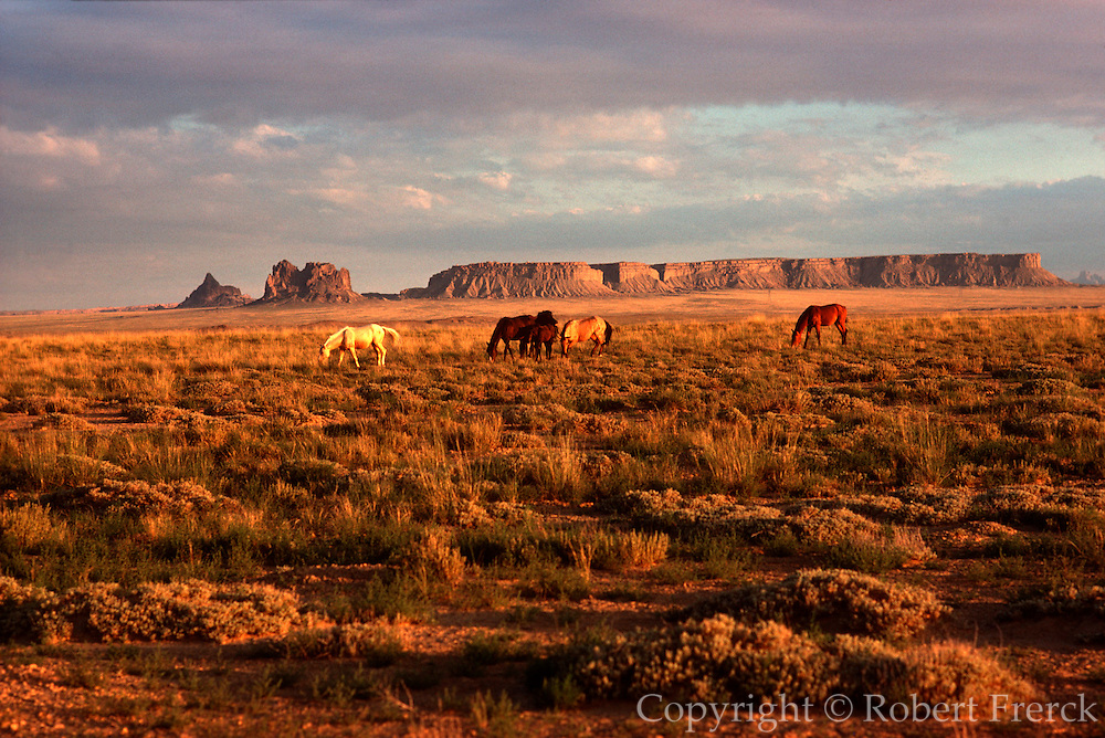 ARIZONA, FOUR CORNERS AREA wild horses grazing on open range with mesas in the background near Monument Valley
