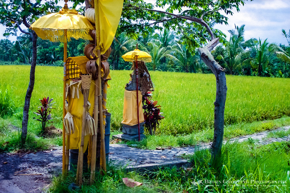 Bali, Badung, Perean. A small village south of Bedugul. Shrines on a rice field.