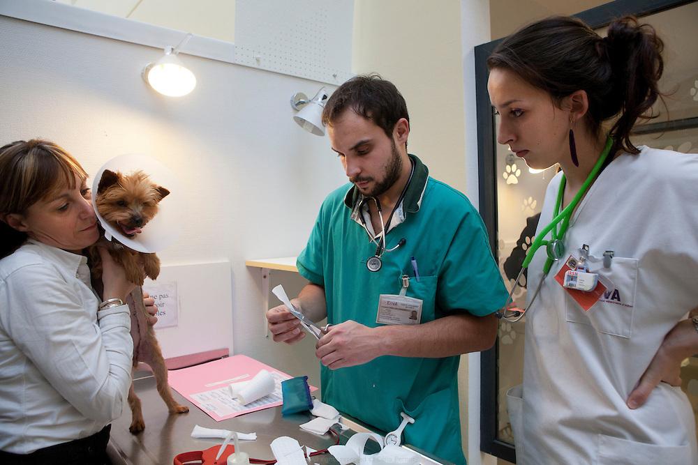Consultation aux urgences de l'École Nationale Vétérinaire de Maisons-Alfort