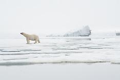 Svalbard #33 2017