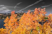Golden fall aspen at June Lake, Inyo National Forest, Sierra Nevada Mountains, California USA