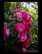 Flower Garden 2012