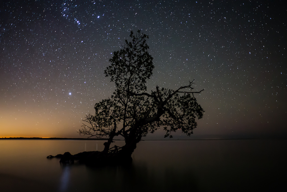 "I call this image ""Orion's Mangrove"" as you can see Orion above an isolated mangrove along the shore of Lulu Key in the Ten Thousand Islands, Everglades."